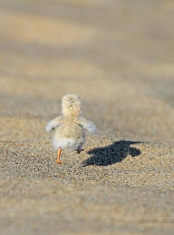 first steps to school,baby chick,learning